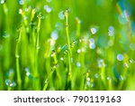 Dew Drops On A Morning Grass...
