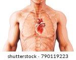 3d illustration of heart   part ... | Shutterstock . vector #790119223