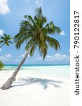 coconut palm tree with bounty... | Shutterstock . vector #790122817