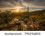 Small photo of It's spring in the Sonoran Desert of Arizona. Wild flowers are blooming now, the cactus will bloom next. This shot was taken near the Rincon Mountains.