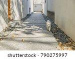 autumn courtyard huizhou... | Shutterstock . vector #790275997