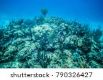 coral reef in san andres island ... | Shutterstock . vector #790326427