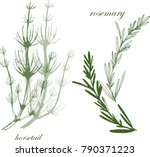 botanical illustration with... | Shutterstock .eps vector #790371223
