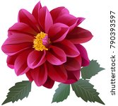 photorealistic red dahlia... | Shutterstock .eps vector #790393597