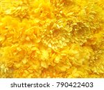 Yellow Chrysanthemums In A...