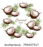 fresh coconut tropic fruit... | Shutterstock .eps vector #790437517