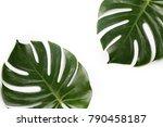 tropical leaves. green fresh...   Shutterstock . vector #790458187