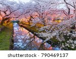 japanese sakura cherry blossom... | Shutterstock . vector #790469137