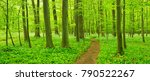 hiking path trough forest of... | Shutterstock . vector #790522267