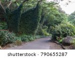 Lush Dense Green Tropical...