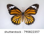 Small photo of The butterflies that are set forth on the wall to show in the Museum.