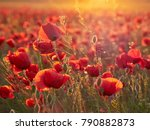 beautiful blooming poppies in... | Shutterstock . vector #790882873