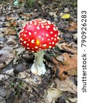 forest mushrooms in the grass.... | Shutterstock . vector #790926283