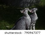 groningen  the netherlands  ... | Shutterstock . vector #790967377