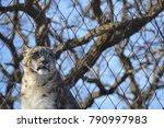 a snow leopard | Shutterstock . vector #790997983