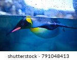 a penguin was swimming at  zoo... | Shutterstock . vector #791048413