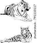 vector drawings sketches... | Shutterstock .eps vector #791110117