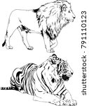 vector drawings sketches... | Shutterstock .eps vector #791110123