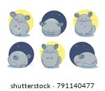 set of chinchilla pet drawings. ... | Shutterstock .eps vector #791140477
