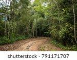 Dirt Road In The Woods Suitabl...