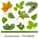 vector collection of leaves
