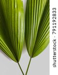 green tropical leaves on grey...   Shutterstock . vector #791192833