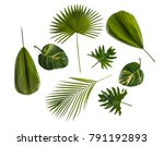 different tropical leaves... | Shutterstock . vector #791192893