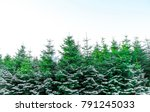 christmas tree on winter | Shutterstock . vector #791245033