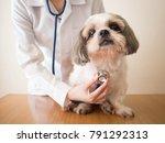 young female veterinarian...