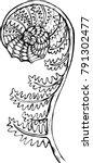 black and white fern...   Shutterstock .eps vector #791302477