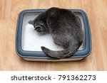 cat using toilet  cat in litter ... | Shutterstock . vector #791362273