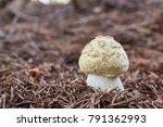 Small photo of Amanita citrina (also known as Amanita mappa) - inedible mushroom. Fungus in the natural environment. English: false death cap, Citron Amanita
