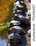 slow turtles queueing. closeup...   Shutterstock . vector #791446357