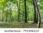bungaku no mori park... | Shutterstock . vector #791506213