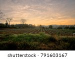 farm field in the rural area... | Shutterstock . vector #791603167