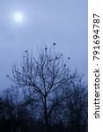 Small photo of ravens on a tree, gothic edgar allan poe sillhouette