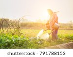 local thai farmer or gardener... | Shutterstock . vector #791788153