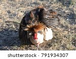 rooster and  hen mating in... | Shutterstock . vector #791934307