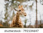 close up  portrait of a young... | Shutterstock . vector #792134647