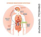stress response system vector... | Shutterstock .eps vector #792344863