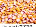 corn seed chemically treated... | Shutterstock . vector #792476827