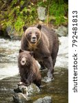 grizzly bear found on the west... | Shutterstock . vector #792481813