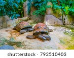 Small photo of Detail of Aldabra tortoise