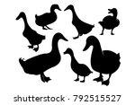 set of duck silhouette... | Shutterstock .eps vector #792515527