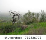 Broom And Dead Almond Tree On...