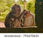 careful monkey mother loves her ... | Shutterstock . vector #792670633