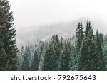 wood forest trees at winter... | Shutterstock . vector #792675643