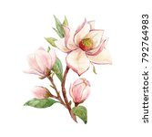 watercolor illustration of a... | Shutterstock . vector #792764983