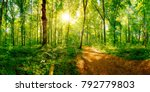 path through a spring forest in ... | Shutterstock . vector #792779803