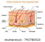 human skin layers vector...   Shutterstock .eps vector #792780523